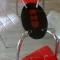 Mese sticla bucatarie  B156